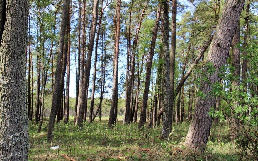 ES patvirtino naują miškų strategiją: numatyta griežta apsauga ir milijardai naujų medžių