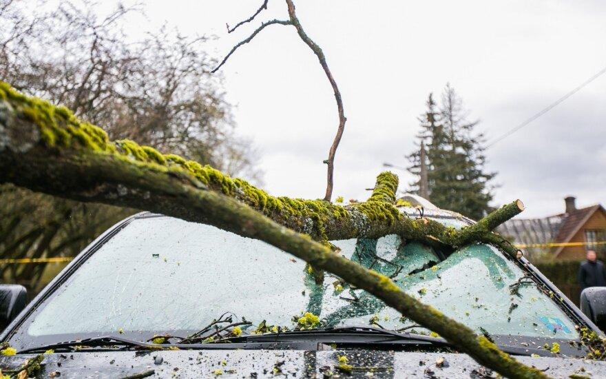 Naktį siautęs stiprus vėjas išvartė daugiau nei 100 medžių