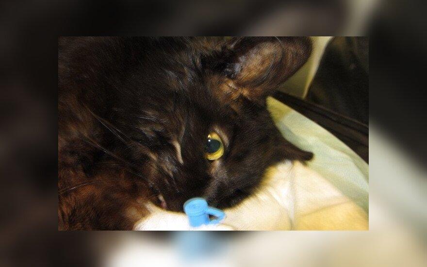 Šokiruoti net ir visko matę veterinarai: didžiulis Vangelkos skausmas