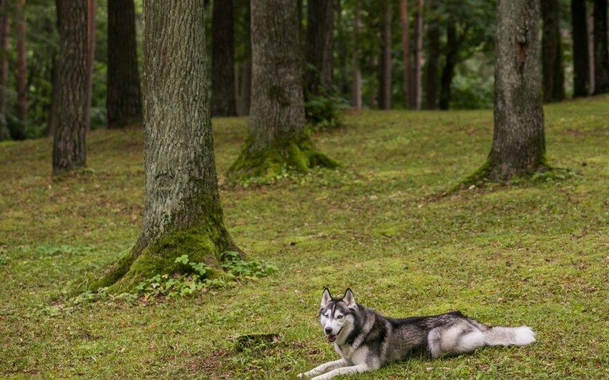 Šiluma jau tuoj trauksis iš Lietuvos: laukia rudeniški pokyčiai, bet tikroji bobų vasara dar gali būti prieš akis