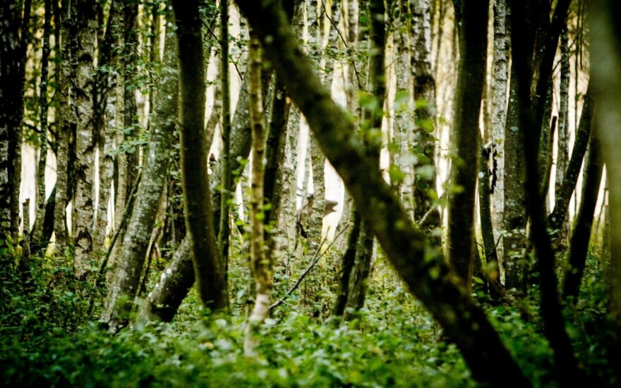 Gaudynės pasienyje: spruko į mišką ir pametė visą <em>turtą</em>