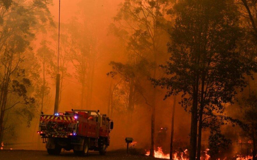 Į šiaurę nuo Sidnėjaus 8 miškų gaisrai susijungė į vieną milžinišką gaisrą