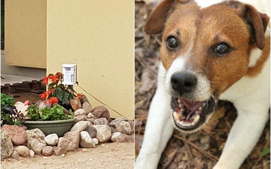 Dėl šunų kaimynai stojo į kovą