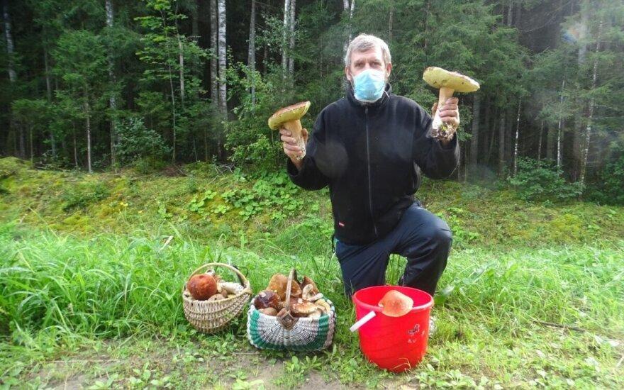 Šilutiškiai džiaugiasi grybų derliumi: neša kepurėse, veža bagažinėse