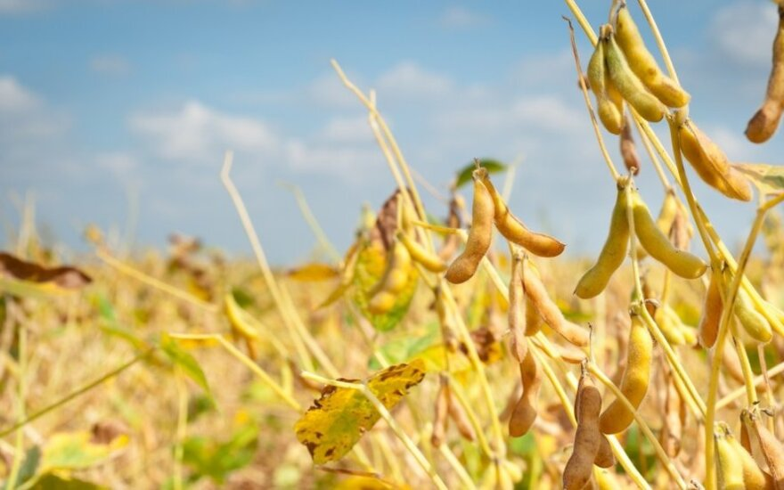 Lietuva galės uždrausti auginti GMO net jei ES tai leis