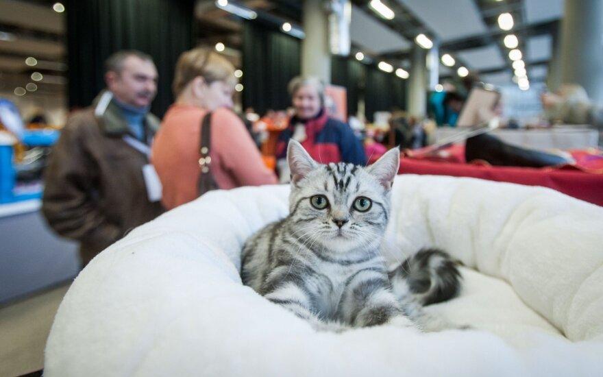 Savaitgalį Vilniuje vyks kačių paroda: laukiama gražuolių iš visos Lietuvos