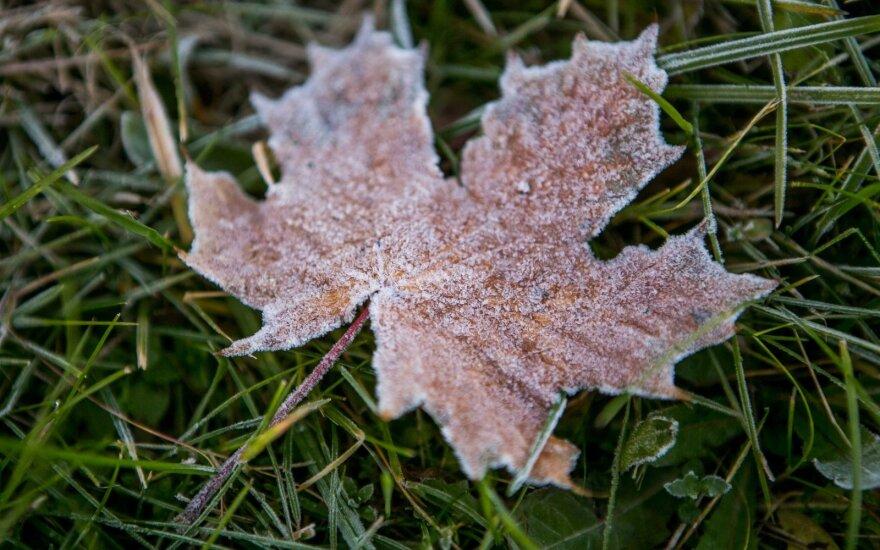 Po šaltos nakties – maloni rudens staigmena: saulės netrūks visoje Lietuvoje