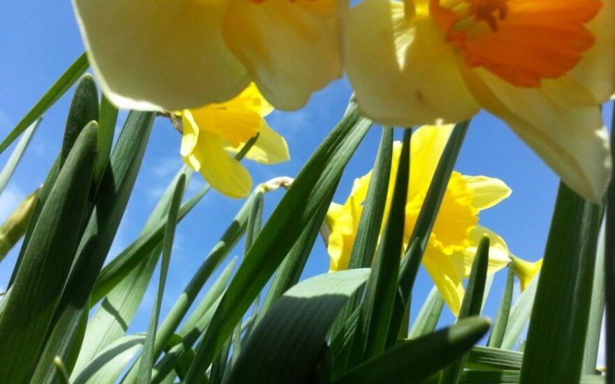 Už lango – pavasaris!