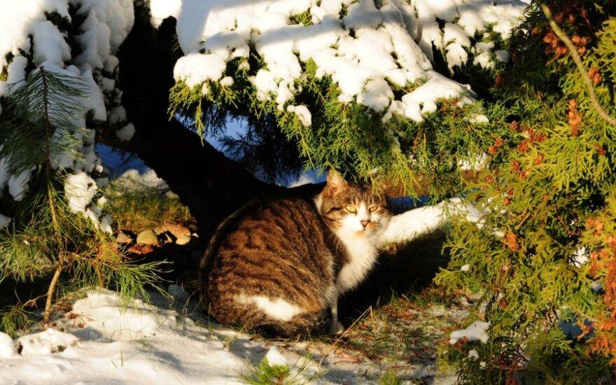 Lietuviai sniego laukia tik per Kalėdas