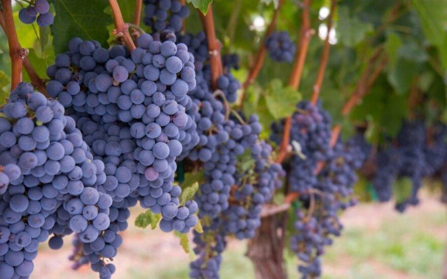 Pavasario sezono vynai Lietuvoje