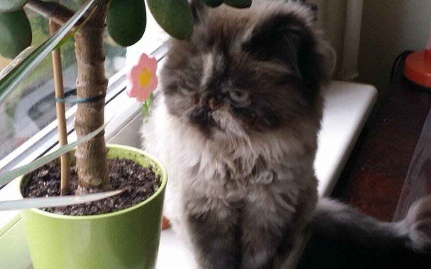 Prašo padėti rasti katytę
