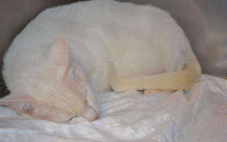 Baltai kurčiai katytei skubiai reikalinga globa!