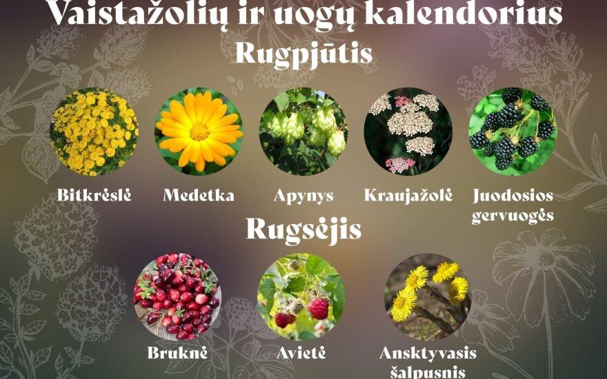 Vaistažolės ir uogos
