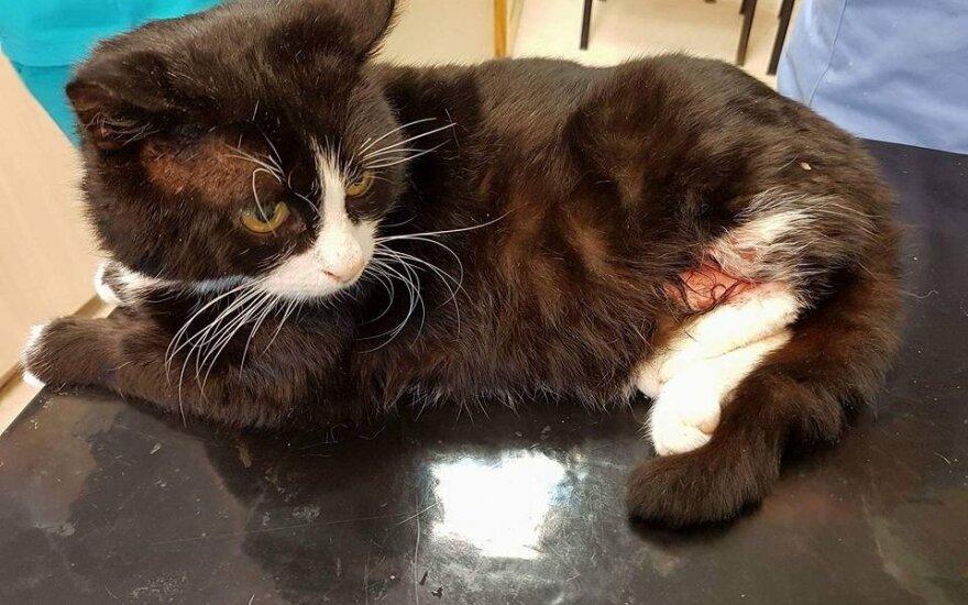 Katinėlis Murkis dar gali gyventi – būtina parama gydymui