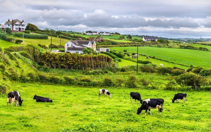 Airijos ūkis