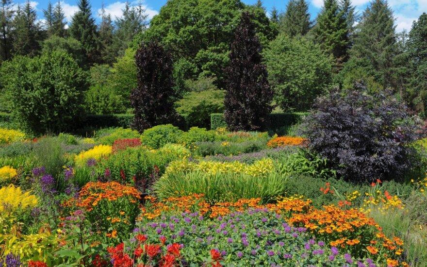 """""""Capel Manor Gardens"""": viena vieta – daugybė sodų"""