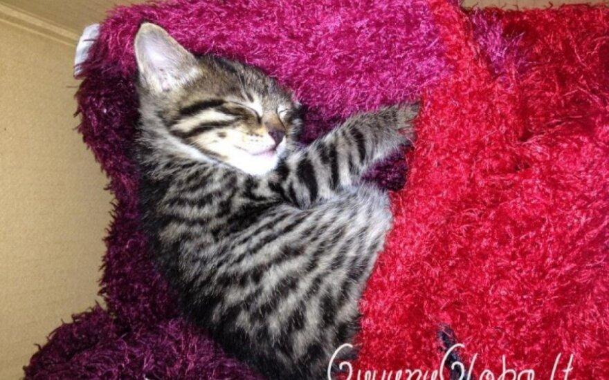 Išmestas katinėlis ieško namų!