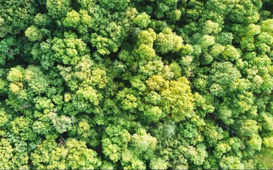 Siūloma galimybė pasodinti medį