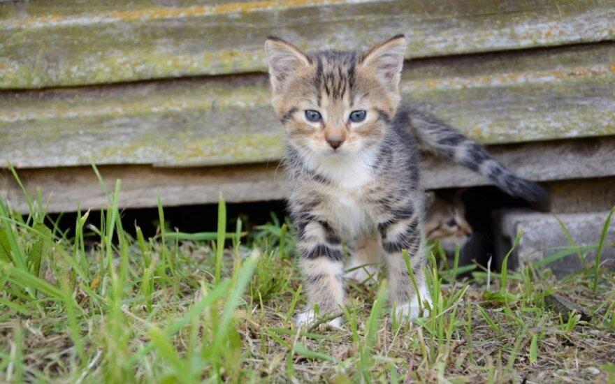 5 nuostabūs katinėliai ieško namų