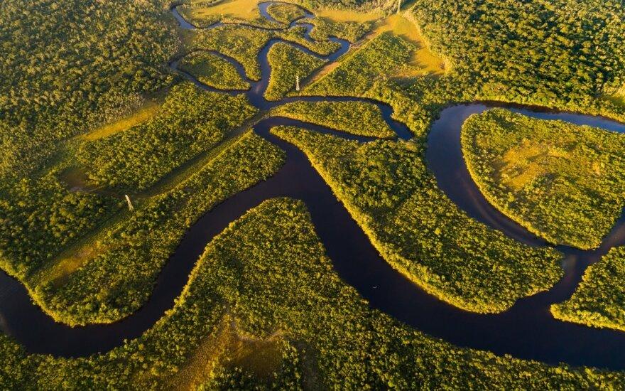 Amazonės džiunglės Brazilijoje