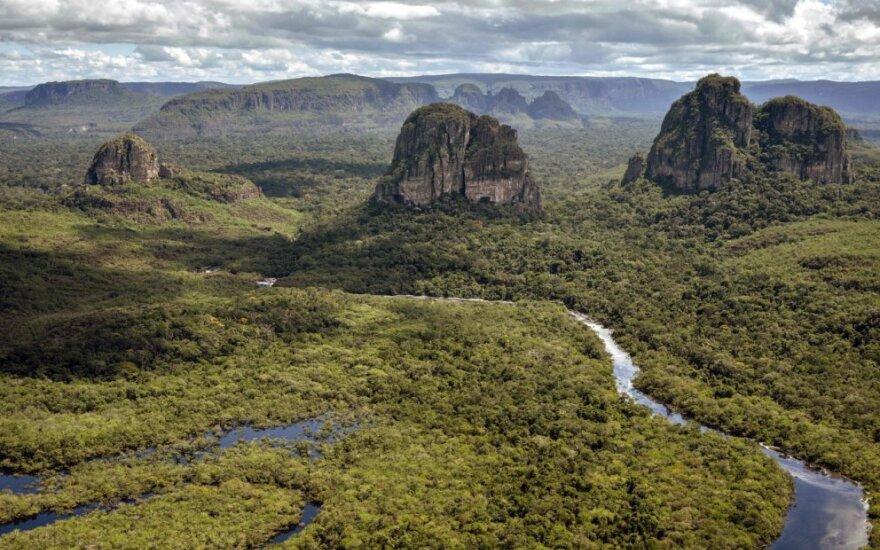 Kolumbijos džiunglės