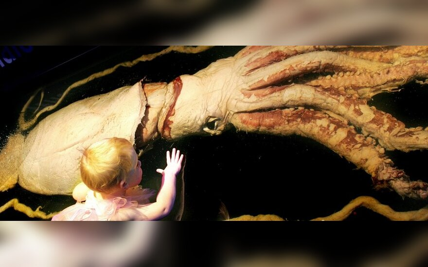 Dešimties metrų ilgio kalmaro gaišena Melburno (Australija) muziejuje
