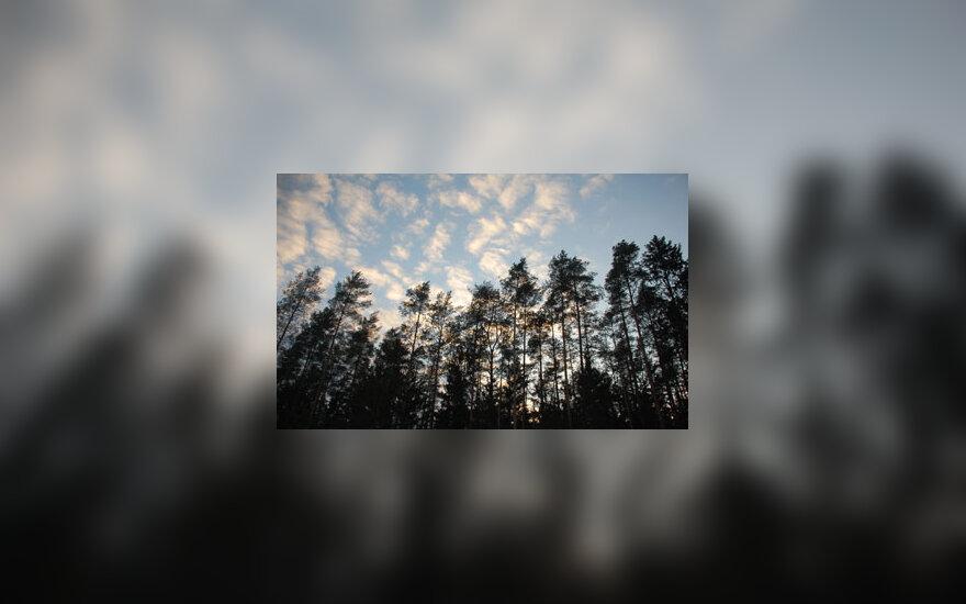 Dangus, debesys, medžiai, miškas, gamta