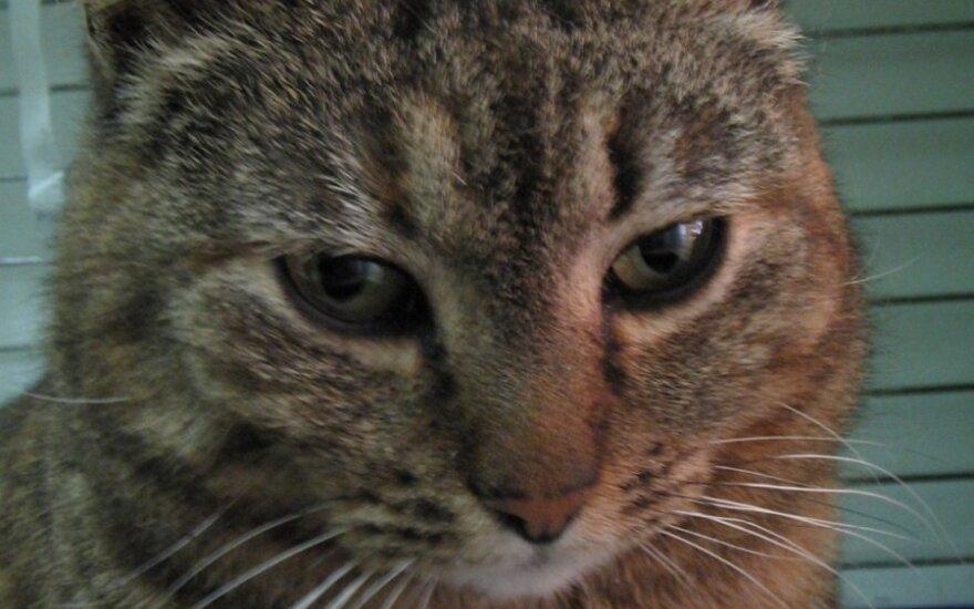 Ypatinga katytė ieško ypatingų šeimininkų