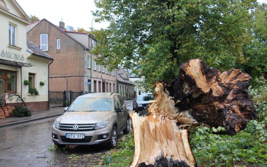 Pajūryje praūžęs vėjas pridarė žalos: medžiai griuvo ant automobilių ir tvorų