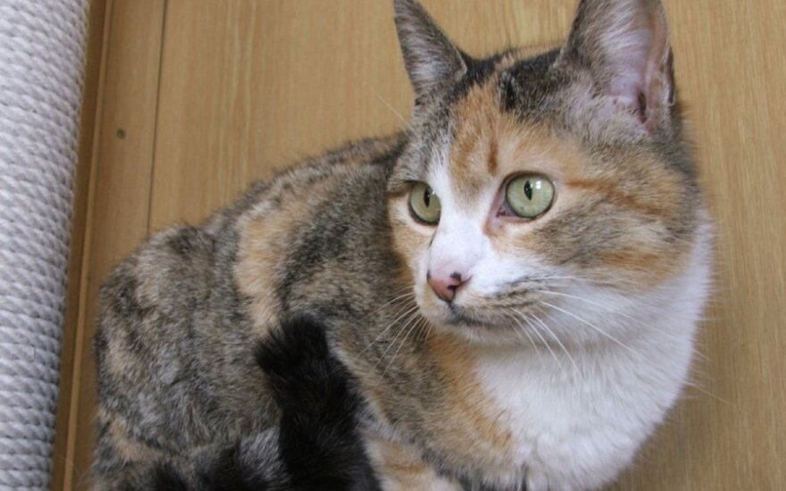 Nepaprasta gražuolė - kačiukė Mandalina