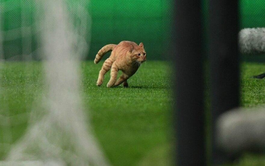 """""""Besiktas"""" - """"Bayern"""" mače aikštėje pasirodė katinas"""