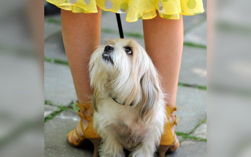 Šunelis ir jo šeimininkė dalyvauja šunų parodoje Minske.