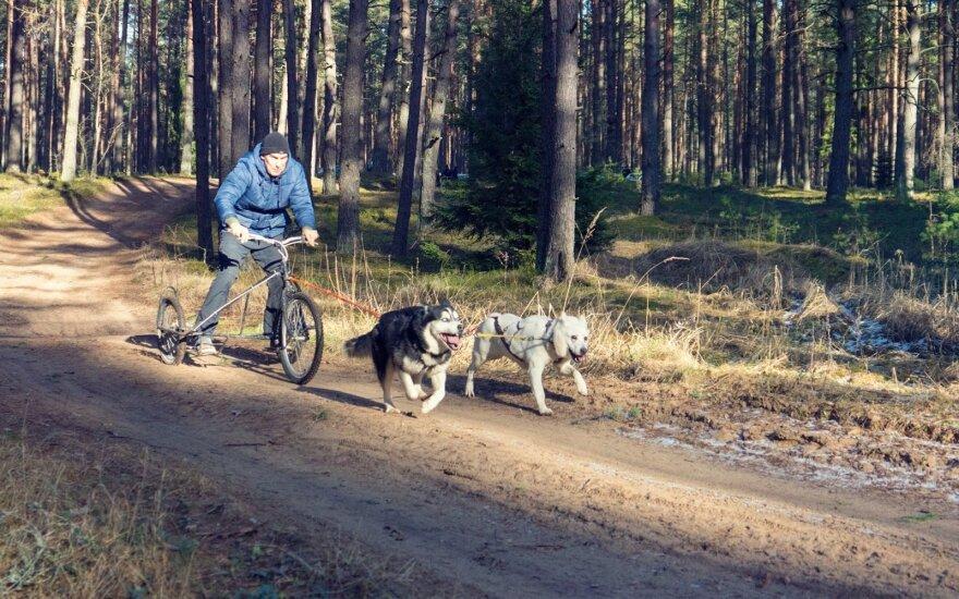 Robertas Andriuška ir šunys