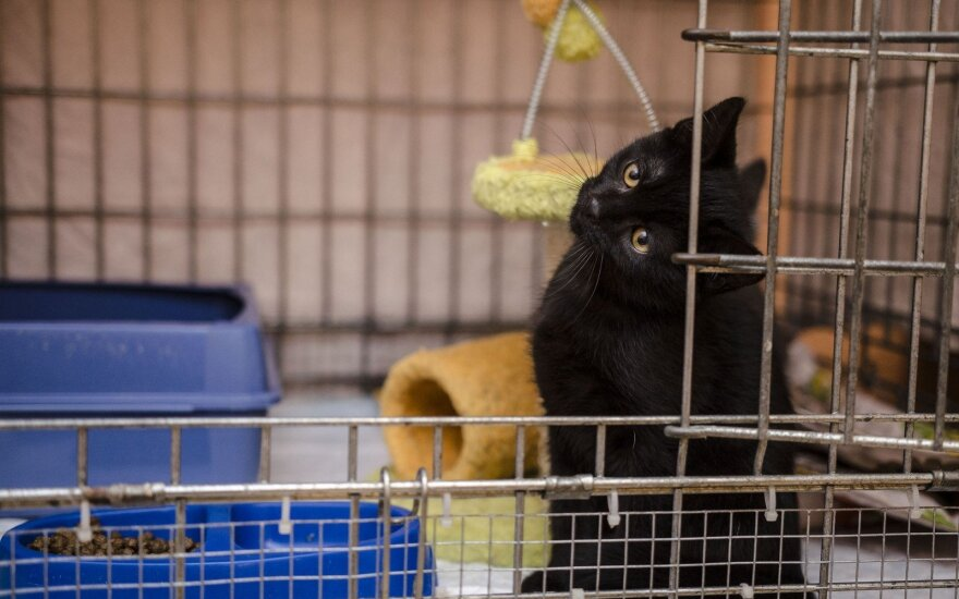 Kačiukas Čingis liūdi prieglaudėlėje ir šaukiasi šeimininkų!