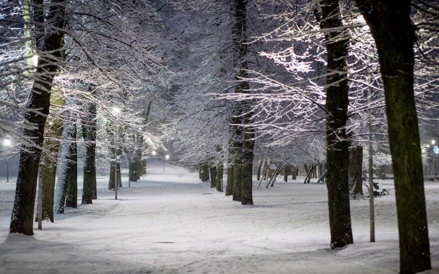 Gausiai pridribus sniego, svorio nebeatlaiko medžiai, prieš didžiulį snygį gyventojus įspėja ugniagesiai