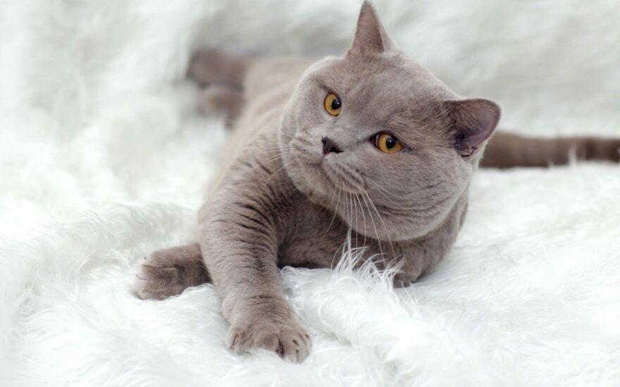 Glaustydamiesi prie kačių galite užsikrėsti pavojinga liga