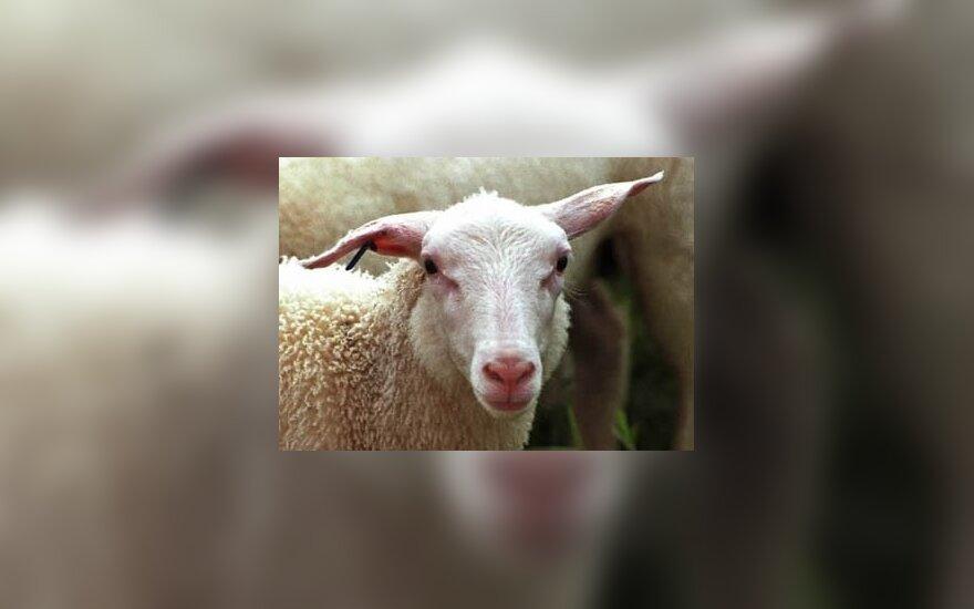 Užmigdyta garsiausia Naujosios Zelandijos avis