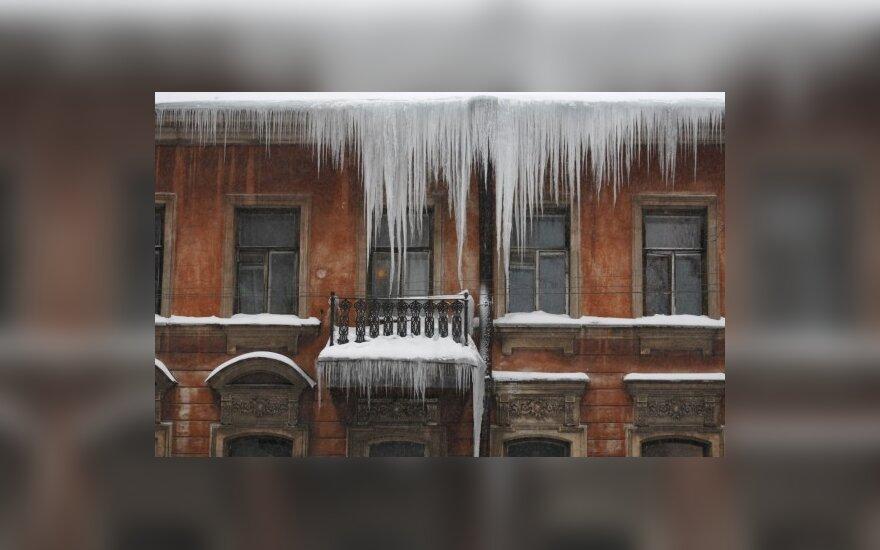 Varvekliai Sankt Peterburge.