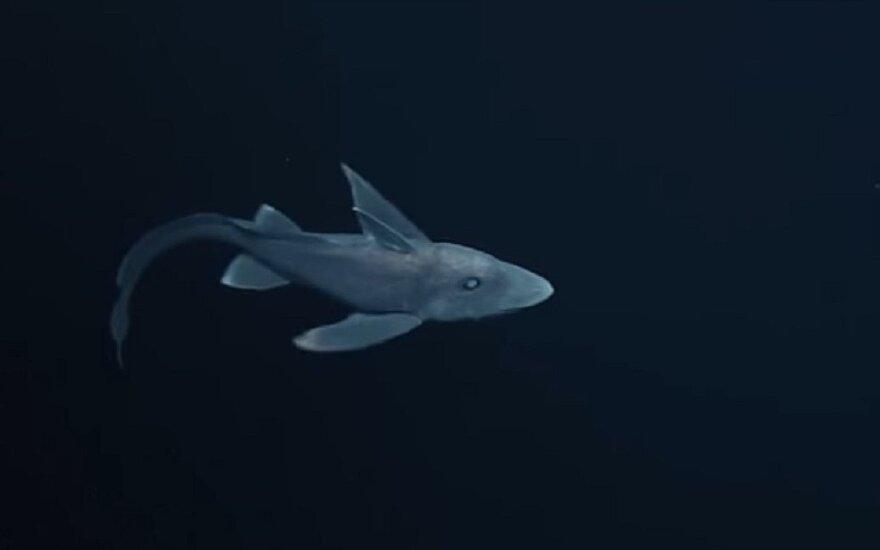 Ryklys vaiduoklis