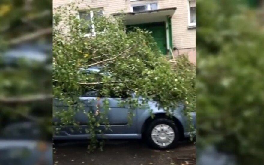 Nemalonumai Klaipėdoje – vėjas verčia medžius