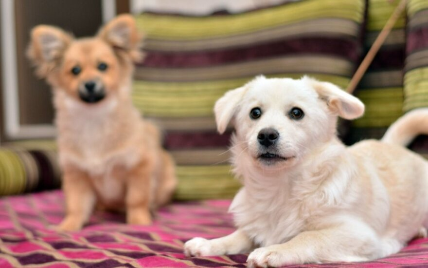 Lithuania looking into reports of illegal puppy smuggling to UK