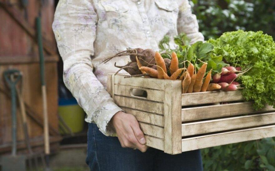 Viena puikiausių lietuviškų daržovių: kraujagyslės ir širdis jums tikrai padėkos