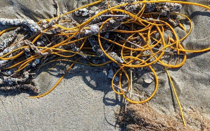 Į virvę panašus koralas / NPS /R. Claussen nuotr.