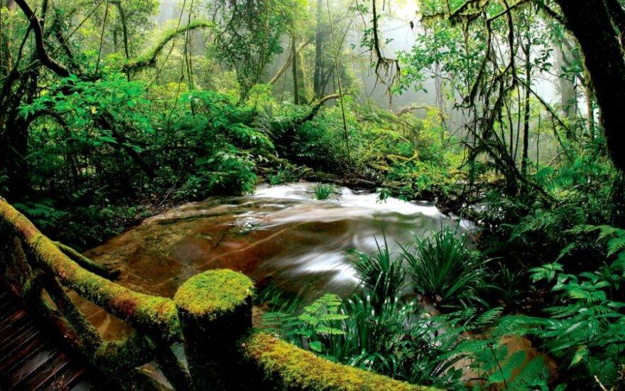 Itin drėgno klimato miškams graso sausros