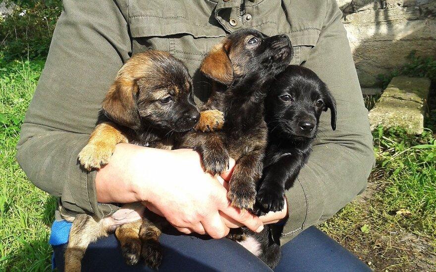 Ieškantiems ištikimo draugo: dovanojami trys mieli šuneliai
