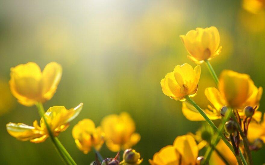 Astrologės Lolitos prognozė kovo 31 d.: energingų veiksmų diena