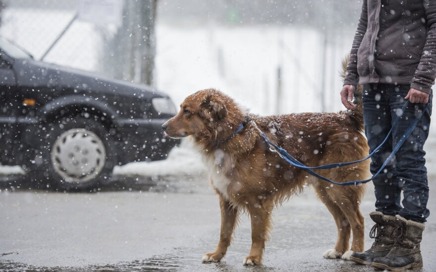 Šilta ir besniegė žiema ne visiems šį tą reiškia: apklausa parodė, kiek iš tiesų lietuvių netiki klimato kaita