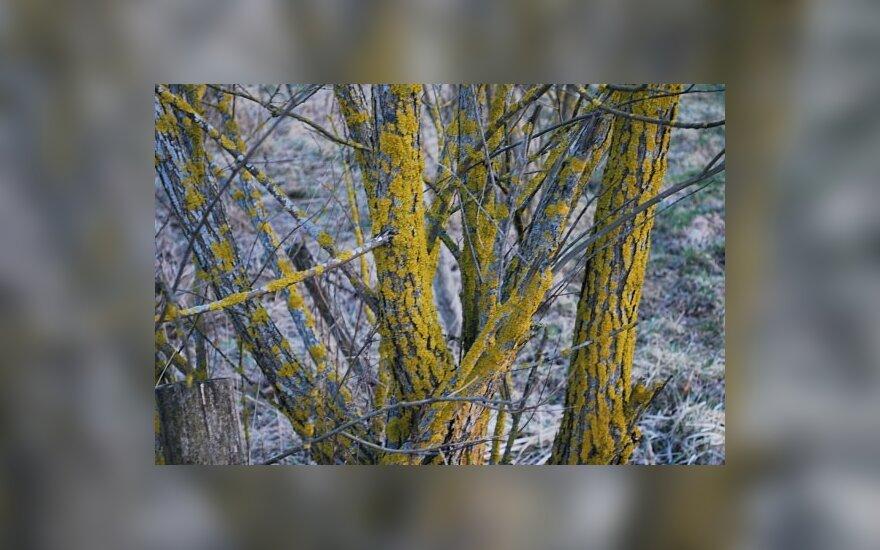 Benamių lietuvių prieglobstis – Piterborou miškai