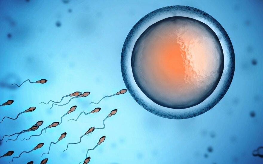 Mokslininkai triumfuoja: pirmą kartą dirbtinai subrandintos žmogaus kiaušialąstės