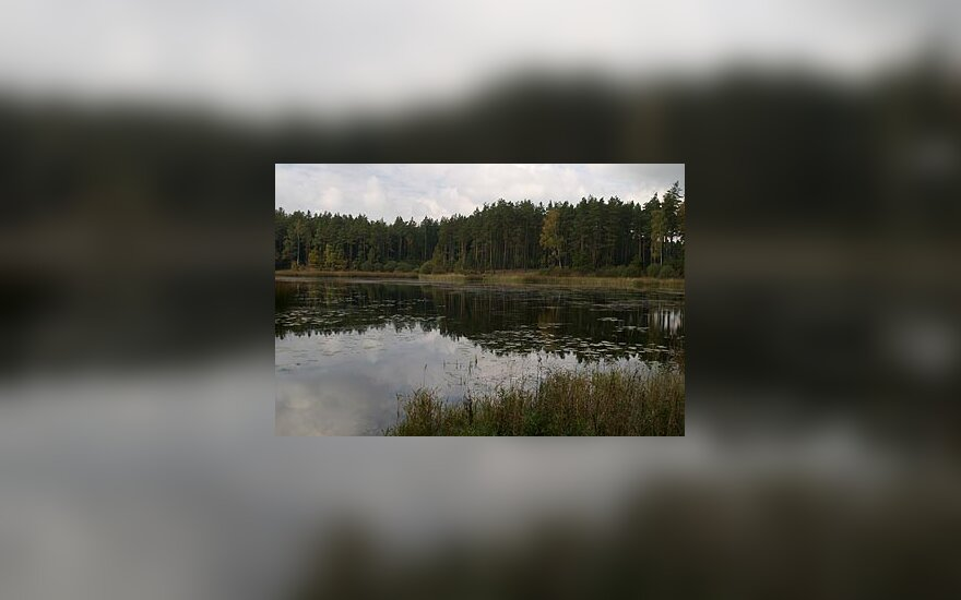 Vandens telkinys, ežeras, pakrantė, miškas